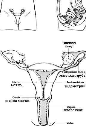 sperma-posle-otmiraniya